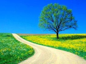 route de printemps